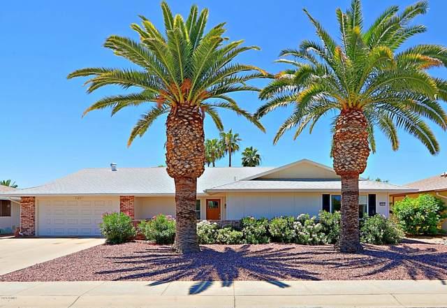 13211 W Hardwood Drive, Sun City West, AZ 85375 (MLS #6083825) :: The AZ Performance PLUS+ Team