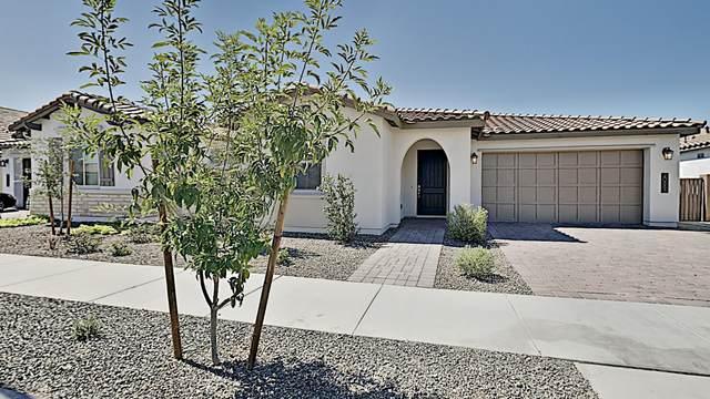 20883 E Cattle Drive, Queen Creek, AZ 85142 (MLS #6100840) :: Nate Martinez Team