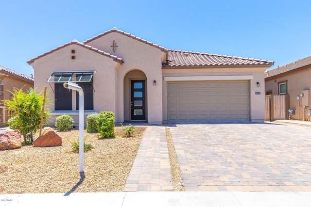 10123 W Robin Lane, Peoria, AZ 85383 (MLS #6100862) :: Arizona Home Group