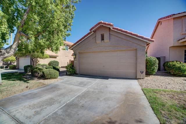 3313 E Nighthawk Way, Phoenix, AZ 85048 (MLS #6105066) :: Yost Realty Group at RE/MAX Casa Grande