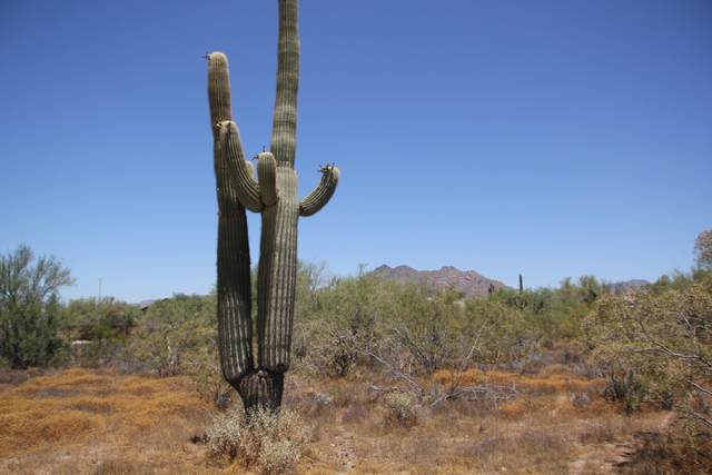 652X E Ashler Hills Approx. Road, Unincorporated County, AZ 85331 (MLS #6112170) :: The Laughton Team