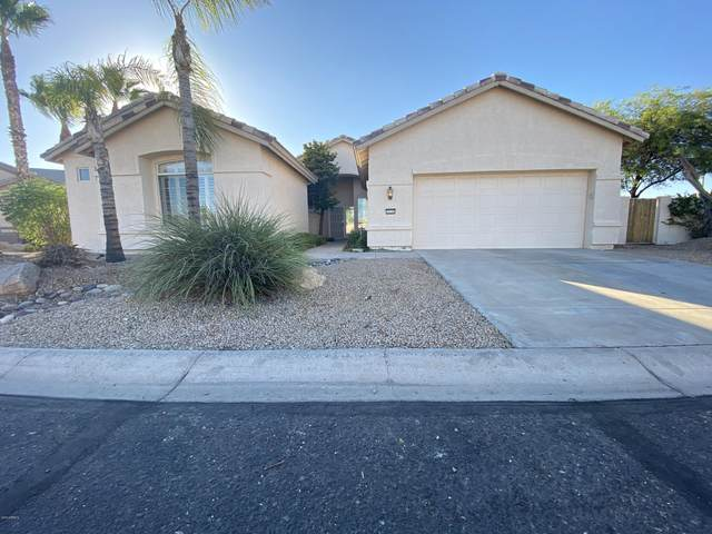 3116 N 148th Avenue, Goodyear, AZ 85395 (MLS #6113071) :: The Ellens Team