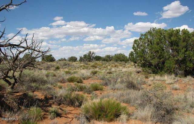 Lot 426 Chevelon Canyon Ranch, Overgaard, AZ 85933 (MLS #6118496) :: Lifestyle Partners Team