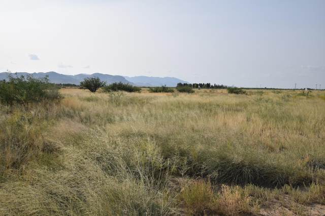 TBD2 N Rabbit Lane, Willcox, AZ 85643 (MLS #6133682) :: Yost Realty Group at RE/MAX Casa Grande