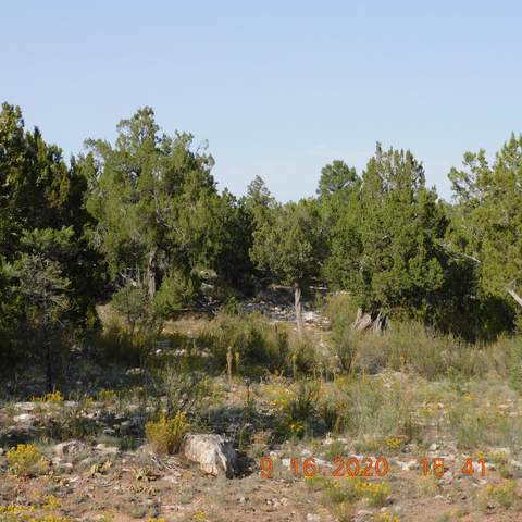 3154 Trail End, Overgaard, AZ 85933 (MLS #6134962) :: Nate Martinez Team