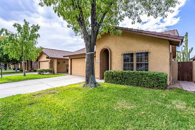 12226 S Potomac Street, Phoenix, AZ 85044 (MLS #6136429) :: Dijkstra & Co.