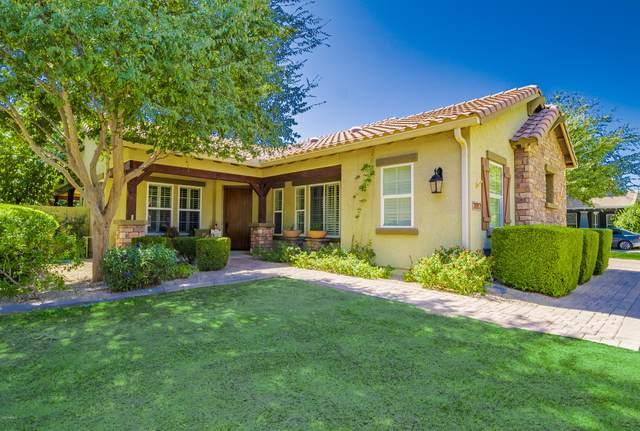 3667 E Marlene Drive, Gilbert, AZ 85296 (MLS #6139244) :: Arizona Home Group
