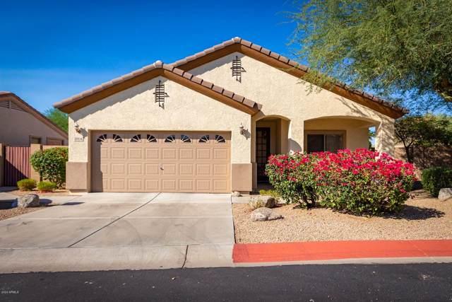 6704 E Red Hawk Street, Mesa, AZ 85215 (MLS #6148518) :: The AZ Performance PLUS+ Team