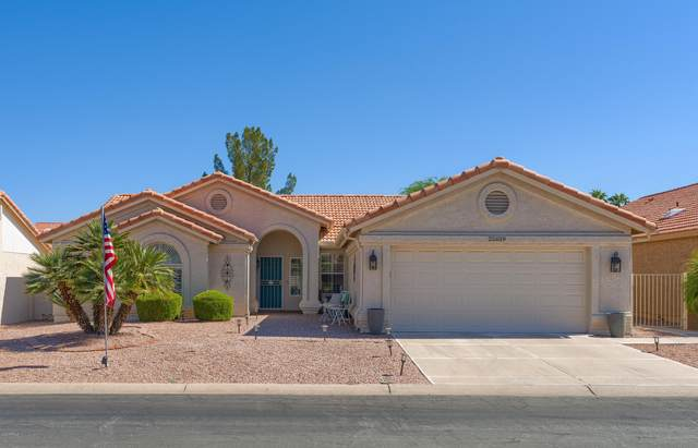 25019 S Drifter Drive, Sun Lakes, AZ 85248 (MLS #6148635) :: Midland Real Estate Alliance