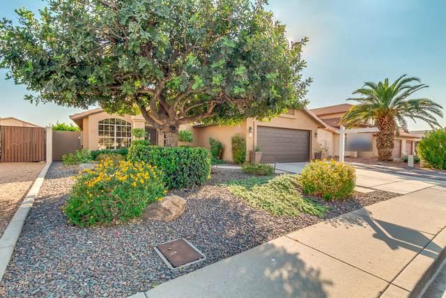 5217 W Oraibi Drive, Glendale, AZ 85308 (MLS #6150001) :: REMAX Professionals