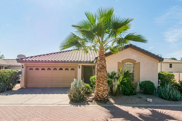 6145 S Wilson Drive, Chandler, AZ 85249 (MLS #6150637) :: CANAM Realty Group