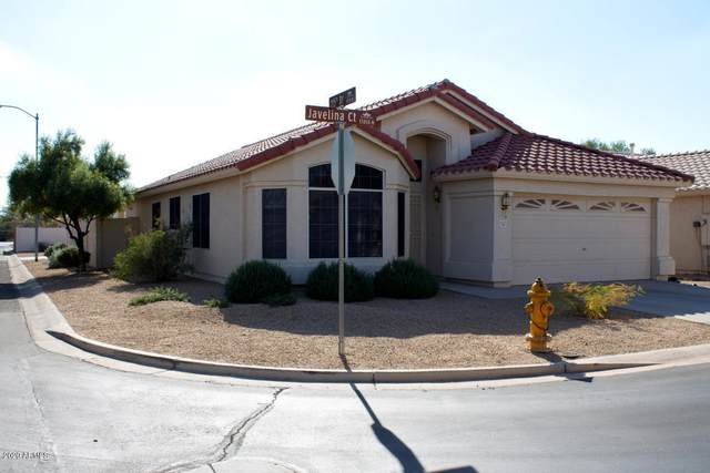 11517 W Javelina Court, Surprise, AZ 85378 (#6160305) :: Long Realty Company