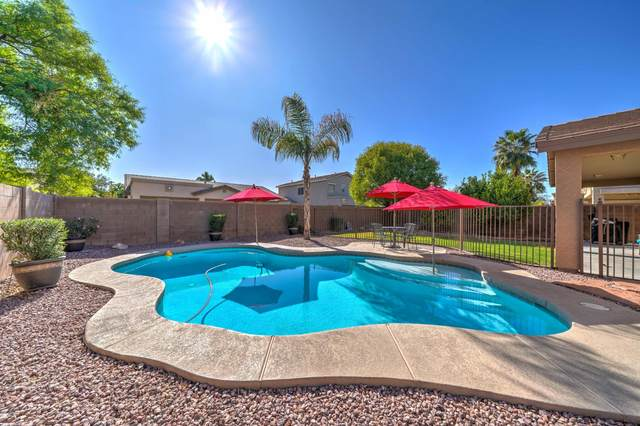 21131 E Roundup Way, Queen Creek, AZ 85142 (MLS #6160612) :: John Hogen | Realty ONE Group