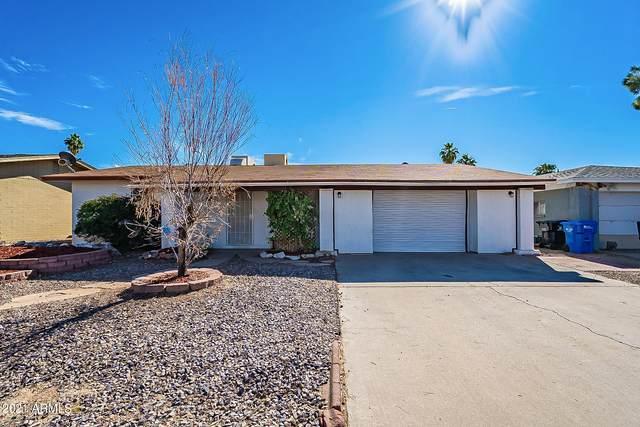 1101 W Halstead Drive, Phoenix, AZ 85023 (MLS #6189596) :: Yost Realty Group at RE/MAX Casa Grande