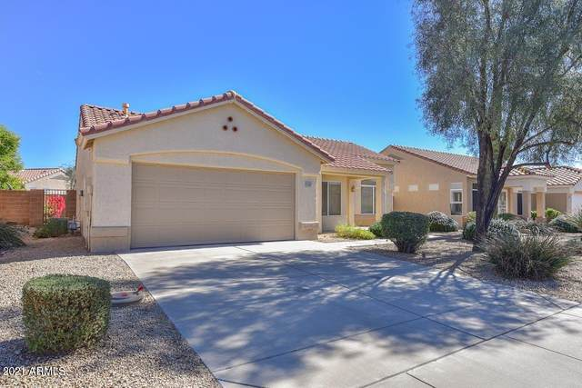 22205 N Cochise Lane, Sun City West, AZ 85375 (MLS #6198736) :: Yost Realty Group at RE/MAX Casa Grande
