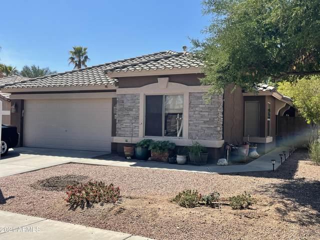 15663 W Saguaro Lane, Surprise, AZ 85374 (MLS #6210200) :: Yost Realty Group at RE/MAX Casa Grande