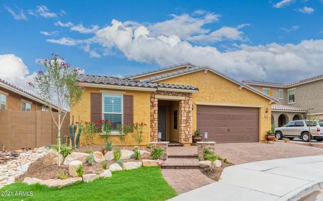 10464 W Rosewood Lane, Peoria, AZ 85383 (MLS #6234546) :: Nate Martinez Team