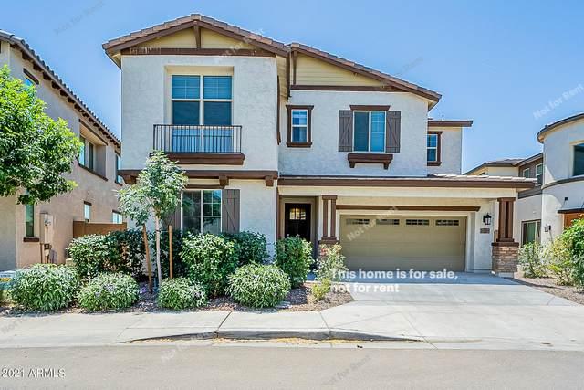 169 E Desert Broom Drive, Chandler, AZ 85286 (MLS #6236074) :: Arizona 1 Real Estate Team