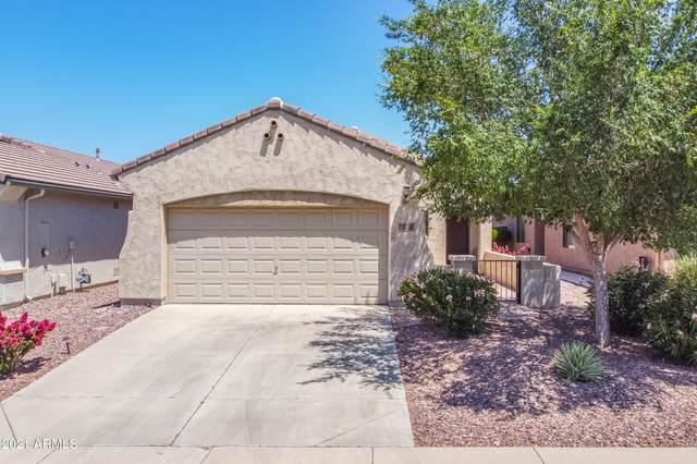 7224 W Pleasant Oak Way, Florence, AZ 85132 (MLS #6236174) :: Yost Realty Group at RE/MAX Casa Grande