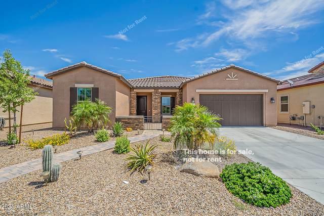 41662 W Harvest Moon Drive, Maricopa, AZ 85138 (MLS #6249502) :: Power Realty Group Model Home Center