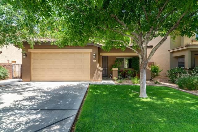 806 W Trellis Road, San Tan Valley, AZ 85140 (MLS #6255705) :: Dijkstra & Co.