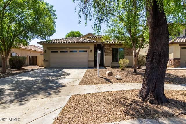 4461 E Warbler Court, Gilbert, AZ 85297 (MLS #6257420) :: Yost Realty Group at RE/MAX Casa Grande