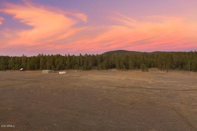 3137 Forest Service 91C Road, Mormon Lake, AZ 86038 (MLS #6258158) :: ASAP Realty