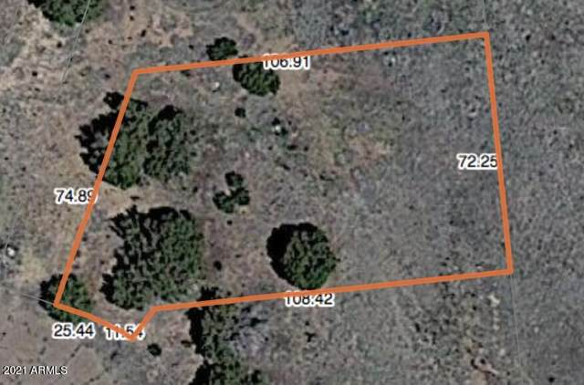 22 County Road 5099, Concho, AZ 85924 (MLS #6260606) :: The Newman Team