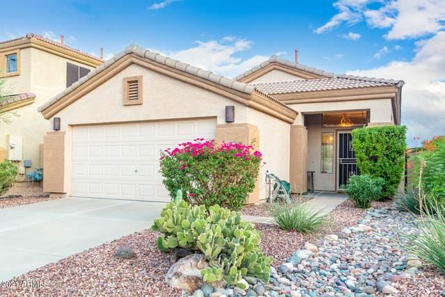5051 E Lucia Drive, Cave Creek, AZ 85331 (MLS #6272723) :: The Riddle Group