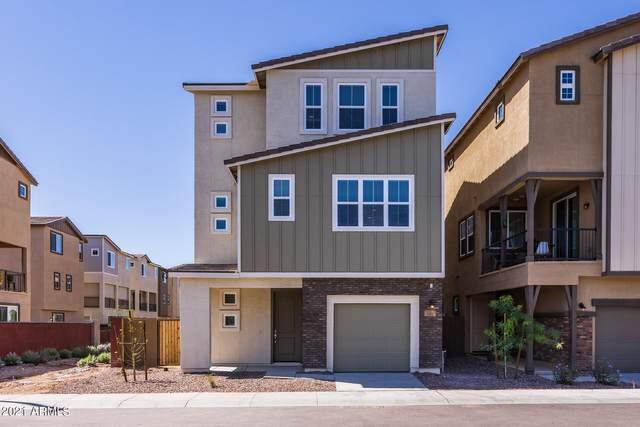 699 W Browning Place, Chandler, AZ 85286 (MLS #6274185) :: Relevate | Phoenix