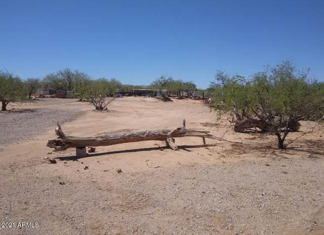 12121 W Trigger Lane, Tucson, AZ 85736 (MLS #6282053) :: Executive Realty Advisors