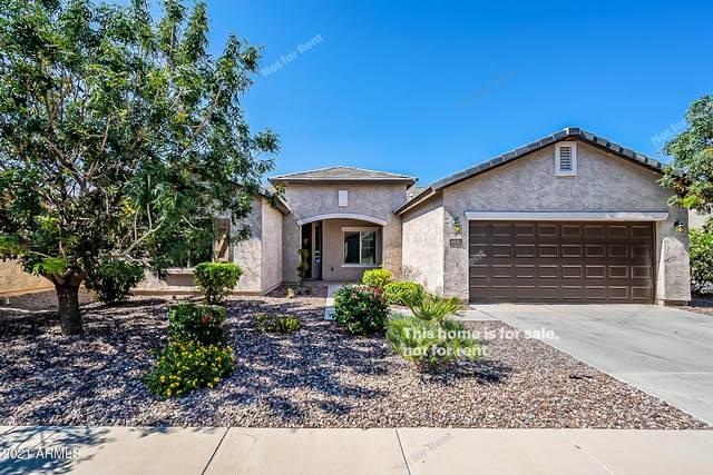 6630 W Desert Blossom Way, Florence, AZ 85132 (MLS #6285363) :: Elite Home Advisors