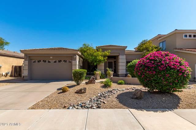 4815 E Daley Lane, Phoenix, AZ 85054 (MLS #6287452) :: Klaus Team Real Estate Solutions