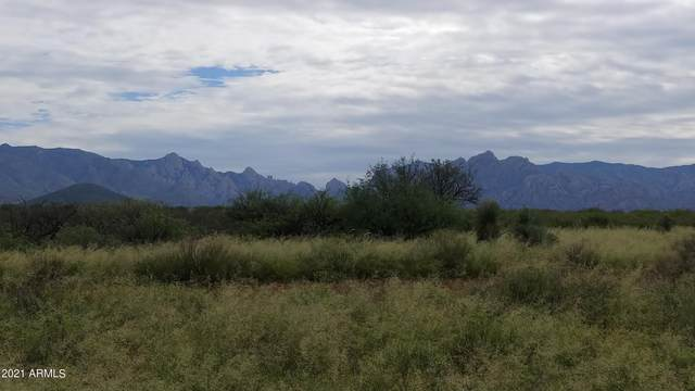 Lot 48 Roadrunner Trail, Saint David, AZ 85630 (MLS #6291049) :: Yost Realty Group at RE/MAX Casa Grande