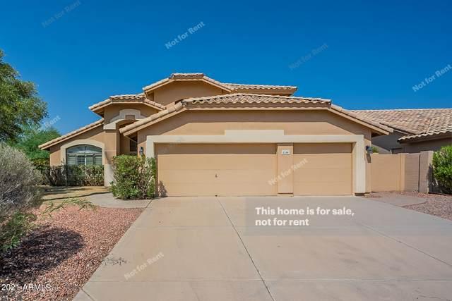 1244 N Hazelton Drive, Chandler, AZ 85226 (MLS #6295001) :: Elite Home Advisors