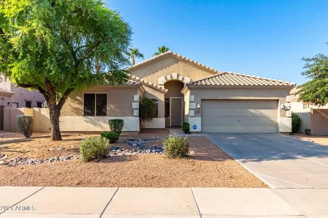 981 E Stottler Court, Gilbert, AZ 85296 (MLS #6295393) :: My Home Group