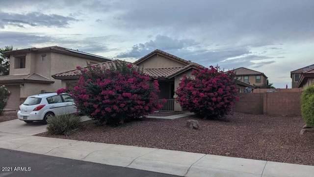 25586 W St Catherine Avenue, Buckeye, AZ 85326 (MLS #6298439) :: Yost Realty Group at RE/MAX Casa Grande