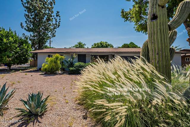 5349 E Adobe Road, Mesa, AZ 85205 (MLS #6302883) :: Klaus Team Real Estate Solutions