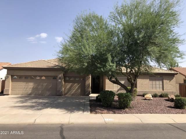 729 S Roanoke Street, Gilbert, AZ 85296 (MLS #6306337) :: Elite Home Advisors
