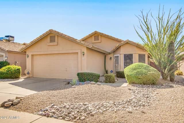 4329 E Rosemonte Drive, Phoenix, AZ 85050 (MLS #6308534) :: The Newman Team