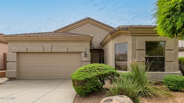 6617 W Molly Lane, Phoenix, AZ 85083 (MLS #6309019) :: The Laughton Team