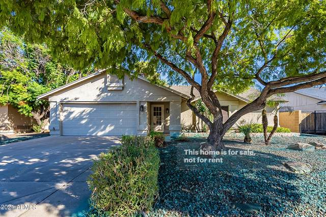 4026 E Taro Lane, Phoenix, AZ 85050 (MLS #6309037) :: Yost Realty Group at RE/MAX Casa Grande