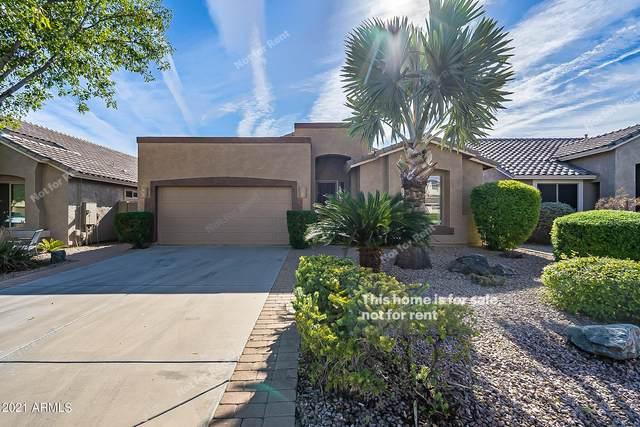 29823 N Little Leaf Drive, San Tan Valley, AZ 85143 (MLS #6310259) :: Keller Williams Realty Phoenix