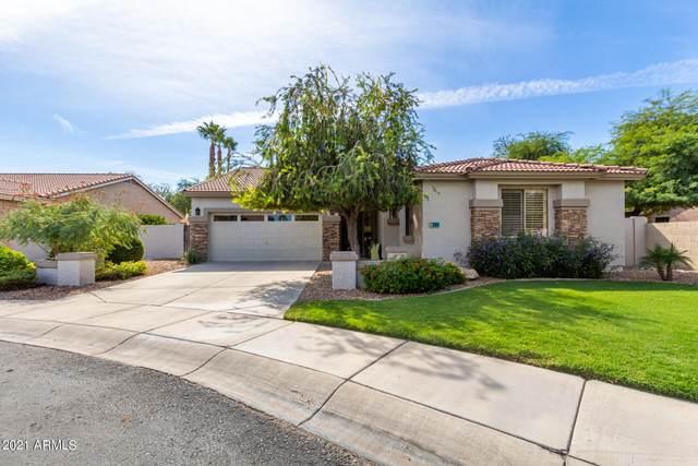 281 W Birchwood Place, Chandler, AZ 85248 (MLS #6310796) :: Zolin Group