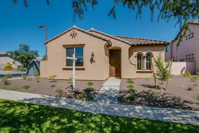 14827 W Alexandria Way, Surprise, AZ 85379 (MLS #5628776) :: Santizo Realty Group
