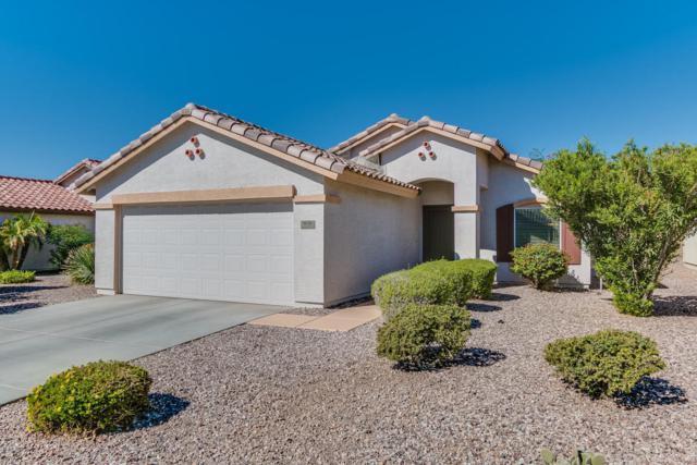 1076 S 232nd Lane, Buckeye, AZ 85326 (MLS #5673961) :: Desert Home Premier