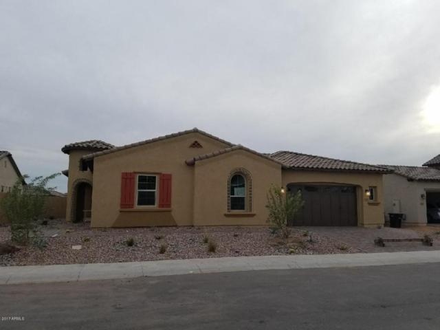 2345 E Beechnut Place, Chandler, AZ 85249 (MLS #5675712) :: Occasio Realty