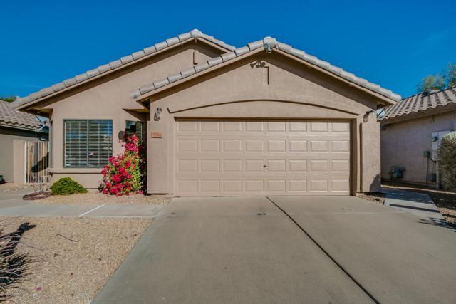 3356 E Blackhawk Drive, Phoenix, AZ 85050 (MLS #5689655) :: Yost Realty Group at RE/MAX Casa Grande