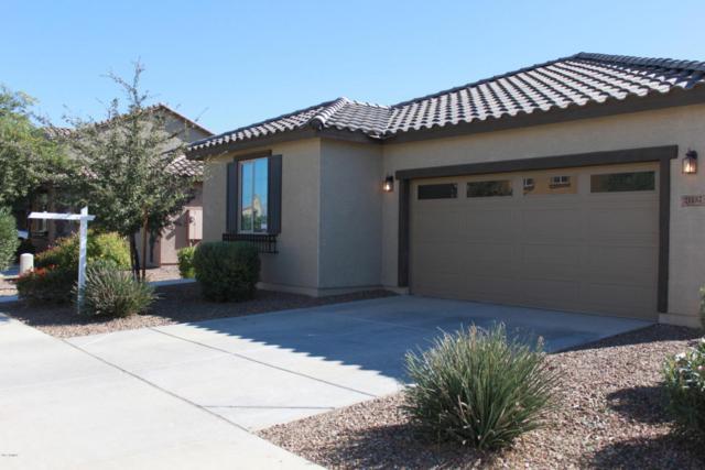 21137 E Via De Olivos, Queen Creek, AZ 85142 (MLS #5690423) :: Revelation Real Estate