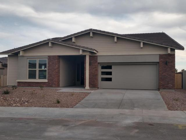 13805 W Sarano Terrace, Litchfield Park, AZ 85340 (MLS #5720934) :: Occasio Realty